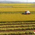 Đô Lương đẩy mạnh đưa cơ giới hóa vào sản xuất nông nghiệp