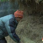 Đô Lương: Tập trung phòng chống rét cho trâu bò