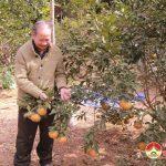Hội người cao tuổi tỉnh Nghệ An tham quan mô hình trồng rừng của ông Trần Văn Ngọc
