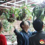 Đô Lương thành lập câu lạc bộ Hoa Phong lan