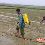 Đô Lương chăm sóc 7.900 lúa xuân