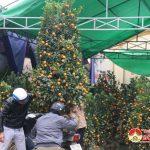 Đô Lương:  Nhộn nhịp chợ Hoa ngày giáp tết