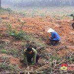 Công ty TNHH 1 thành viên Lâm Nghiệp Đô Lương: Ra quân trồng 250 ha rừng vụ Xuân 2018.