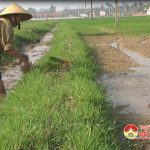 Xã Trung Sơn tích cực chống hạn cho lúa vụ xuân năm 2018