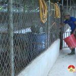 Nguyễn Xuân Sơn – Làm giàu từ chăn nuôi lợn rừng
