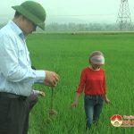 Lãnh đạo huyện Đô Lương kiểm tra sâu bệnh trên lúa