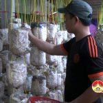 Mô hình trồng nấm cho thu nhập cao của nông dân Bùi Duy Công ở xã Đặng Sơn