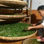 Xã Đặng Sơn – Khơi dậy nghề truyền thống trồng dâu nuôi tằm