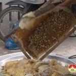 Thu nhập cao nghề nuôi ong mật.
