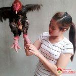 Chị Phan Thị Hoa làm giàu  từ nuôi gà  Đông Tảo