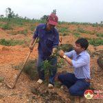 Đô Lương trồng 5 ha cây chanh không hạt