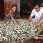 Bà con nông dân Đặng Sơn triển khai  nuôi tằm đầu vụ