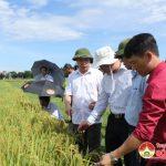 Đô Lương Hội thảo giống lúa hàng hóa chất lượng cao AC5.