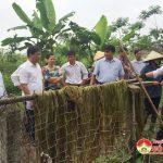 Gia đình anh Lê Văn Toàn thu hoạch 1 ha cây Gai lấy sợi
