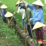 Hội nông dân Bồi Sơn ra quân nạo vét kênh mương thủy lợi