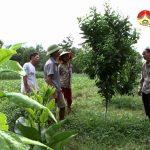 Đô Lương tập trung cải tạo vườn tạp thành vườn cây ăn quả .
