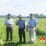 Đồng chí Ngọc Kim Nam kiểm tra tình hình lúa đổ tại các địa phương