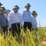 Đồng chí Nguyễn Xuân Đường – chủ tịch UBND tỉnh kiểm tra năng suất lúa vụ xuân ở huyện Đô Lương