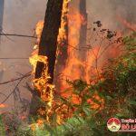 Đô Lương xảy ra một vụ cháy rừng