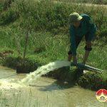 100 ha lúa của xã Mỹ Sơn bị khô cháy do nắng nóng kéo dài
