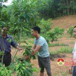 Đồng chí Ngọc Kim Nam- Bí thư huyện ủy- Chủ tịch UBND huyện thăm mô hình trồng cây ăn quả và chăn nuôi tại Hồng Sơn.