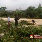 Bài Sơn: Mưa lũ gây ngập nhiều tuyến đường và lúa hè thu