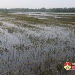 Đô Lương: Hơn 1.000 ha lúa hè thu mất trắng do ngập lụt