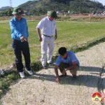 Đô Lương: 1000 ha lúa bị thiếu nước