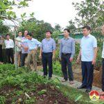Hội Nông dân huyện Đô Lương tổ chức tham quan mô hình xây dựng nông thôn mới kiểu mẫu tại huyện Can Lộc- Hà Tĩnh.