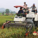 Đô Lương-    Xã Lưu Sơn: Khẩn trương sản xuất 160 ha cây vụ đông