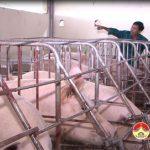 Đô Lương phát triển nhiều mô hình chăn nuôi theo tiêu chuẩn VietGap