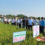 Đô Lương: Hội thảo đầu bờ giống lúa thơm chất lượng cao VH6 ngắn ngày