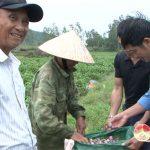 Xóm 12, Thái Sơn trồng cà tím cho thu nhập cao