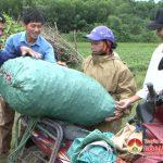 Xóm 12, Thái Sơn trồng 4 ha cà tím cho thu nhập cao