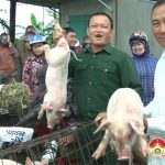 Độc đáo chợ lợn con xứ Lường