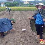 Xã Trù Sơn tích cực sản xuất vụ đông