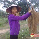 Đô Lương: Trồng cây gai hướng đi mới cho nông dân thoát nghèo