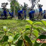 Đoàn viên thanh niên Đô Lương trồng sim tím tại di tích Truông Bồn