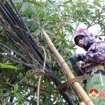Đô Lương 3 nhà mạng thực hiện dự án chỉnh trang dây cáp thông tin viễn thông