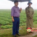 Đồng chí Nguyễn Trung Thành – Phó chủ tịch UBND huyện kiểm tra sản xuất vụ đông tại xã Trù Sơn.
