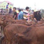 Nhộn nhịp chợ Ú xã Đại Sơn