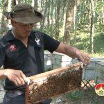 Xã Giang Sơn Tây nhiều nông dân làm giàu từ nuôi ong