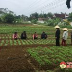 Trung tâm bảo trợ xã hội Nghệ An: Trồng rau sạch để nâng cao sức khỏe  bệnh nhân