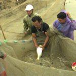 Phát triển cá nước ngọt ở Đô Lương