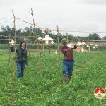 Xã Giang Sơn Đông: Xây dựng thành công mô hình trồng hoa