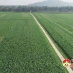 Đất bãi Đô Lương – tiềm năng phát triển