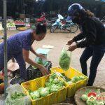 Thị trường thực phẩm Đô Lương sau tết Kỷ Hợi bình ổn, Tía tô tăng đột biến do nhu cầu giải cảm