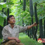 Hiệu quả từ cây bí vùng đất bãi xã Trung Sơn
