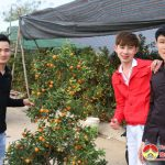 Đô Lương: Nhộn nhịp chợ hoa, cây cảnh ngày Tết