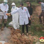 Đô Lương: Tổ chức tiêu hủy 1000 con gà giống không rõ nguồn gốc